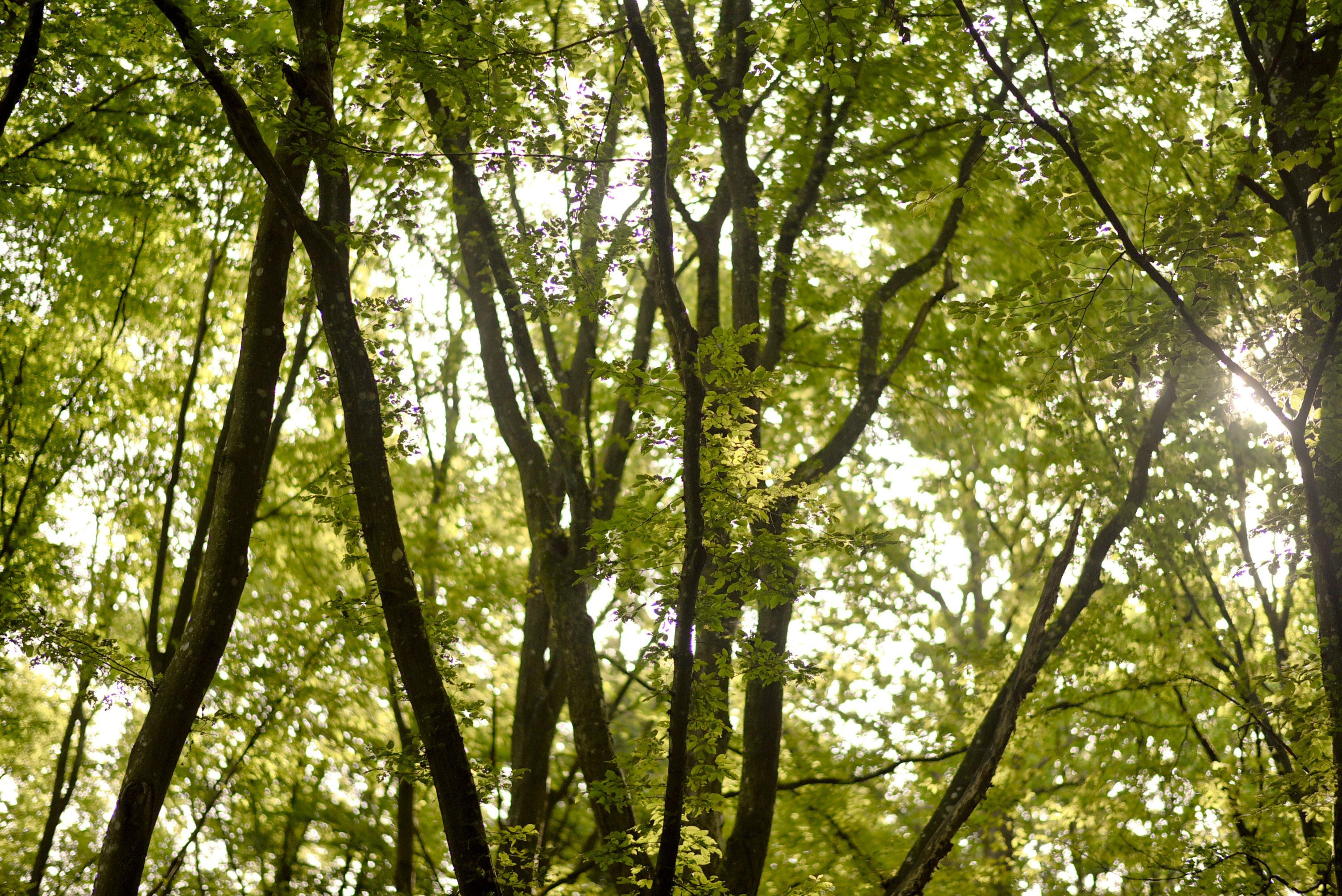 skog_4